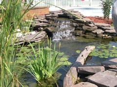 dekoratyviniai baseineliai