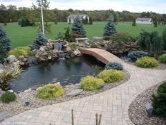 Dekoratyvinio baseino aplinka