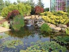 Dekoratyvinio baseino aplinka ir augalai