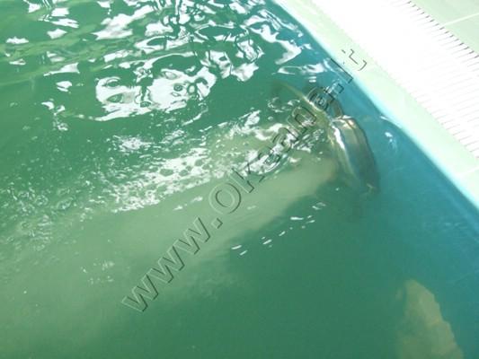 Vandens atrakcijos: Plaukimo srovė - priešsrovė