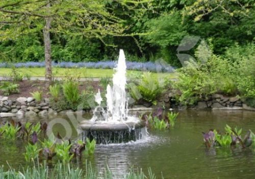 Naturalus tvenkinys su fontanu. Projektas #13
